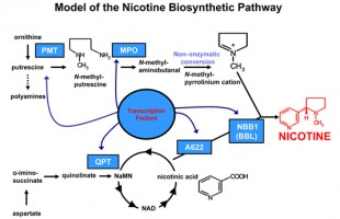Nicotine in Electronic Cigarettes: 10 Facts All Users Should Know